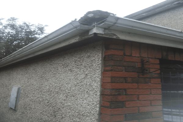 Fascia Board Gutter Replacement in Sheffield
